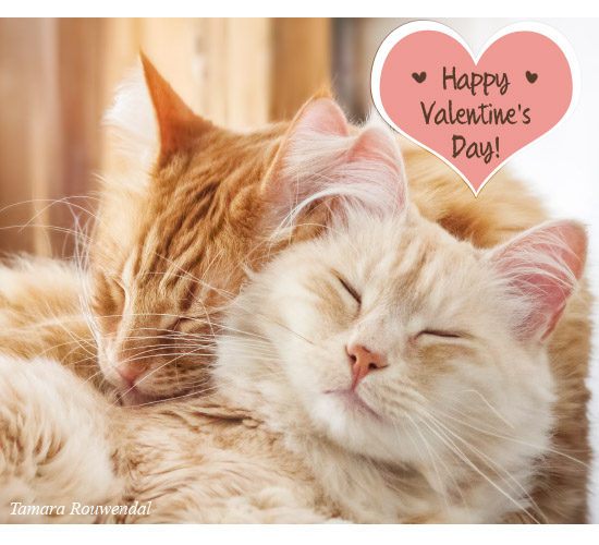 Valentine Kitties...