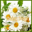Fresh & Beautiful Daisies!