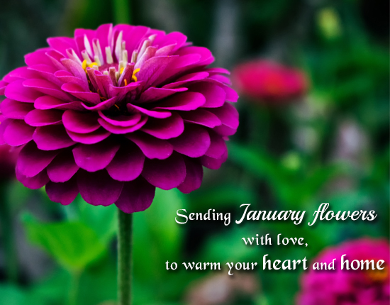 A Special Wish With January Flowers.