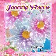 January Flowers From Me To You..
