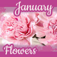 Beautiful Blooms Of January!