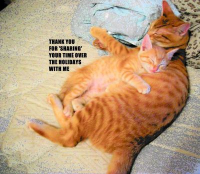 Thank You Cats.