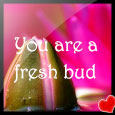 You Are A Fresh Bud!