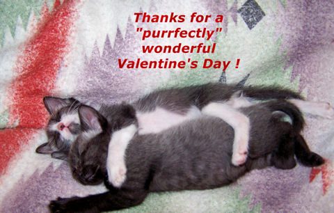 Valentine's Day Thanks, Cats!