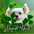 St. Patrick's Day Thanks!