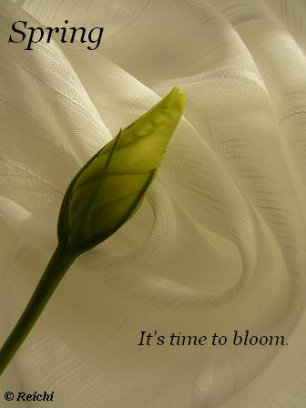 It's Time To Bloom.