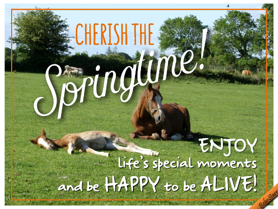 Cherish The Springtime!