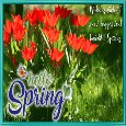 A Happy Spring Card For You.