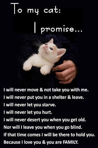 To My Cat I Promise.