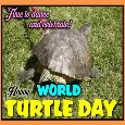 Turtle Dance And Celebration.