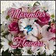Beautiful Bright November Flowers!