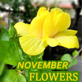 Beautiful November Flower!