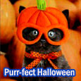 Purr-fect Halloween Wishes.