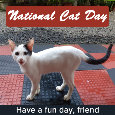 National Cat Day, White Kitten...