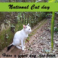 National Cat Day, White Kitten Garden.