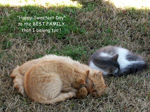 Sweetest Day Family Cats.