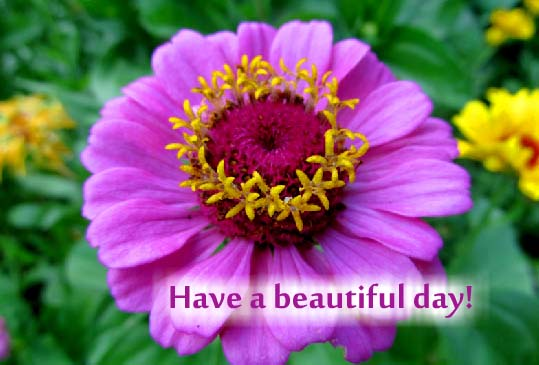 Send September Flowers Card!