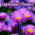 Beautiful September Flowers To You!