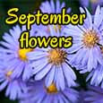September Flowers For A Beautiful Day.