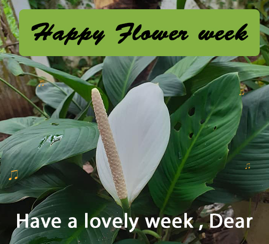 Happy Flower Week, White Flower.
