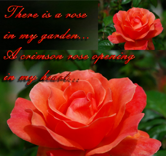 There Is A Rose In My Garden.
