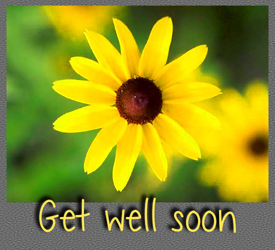 Get Well Soon Yellow Flower.