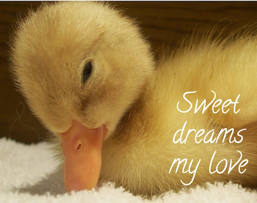 Sweet Dreams To The One You Love.