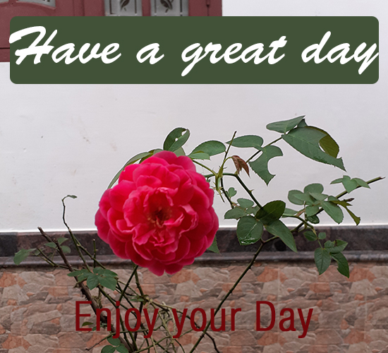 Have A Great Day, Rose...
