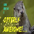 Otterly Awesome Day!