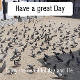 Have A Great Day, Pigeons...