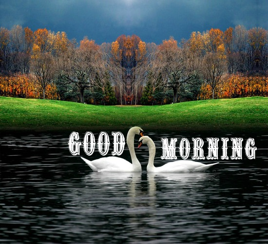 Best Of Natures Morning For You. Free Good Morning eCards