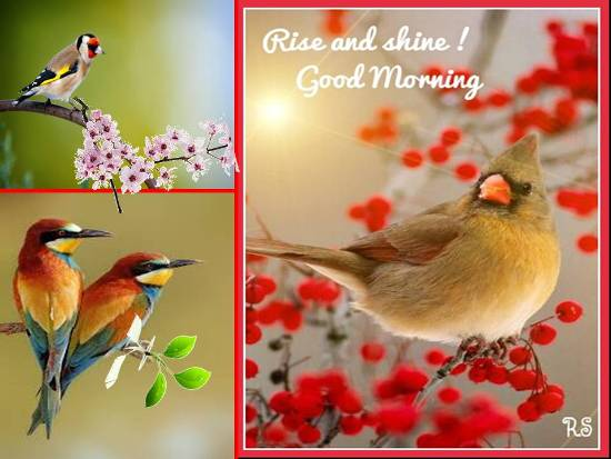 Sweet Greetings For A Lovely Morning. Free Good Morning