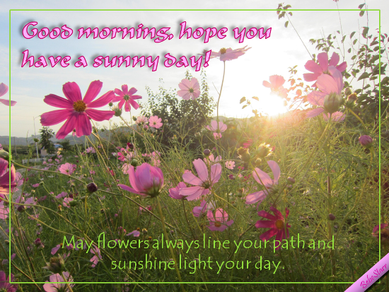 Have A Sunny Day!