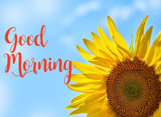 Good Morning Wishes With Sunflower.