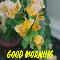 Good Morning Start Afresh...