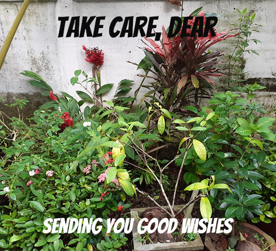 Take Care, Dear Garden.