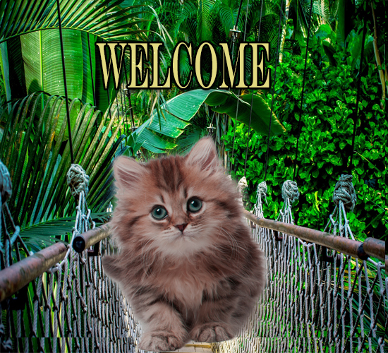 Cat Welcomes You.