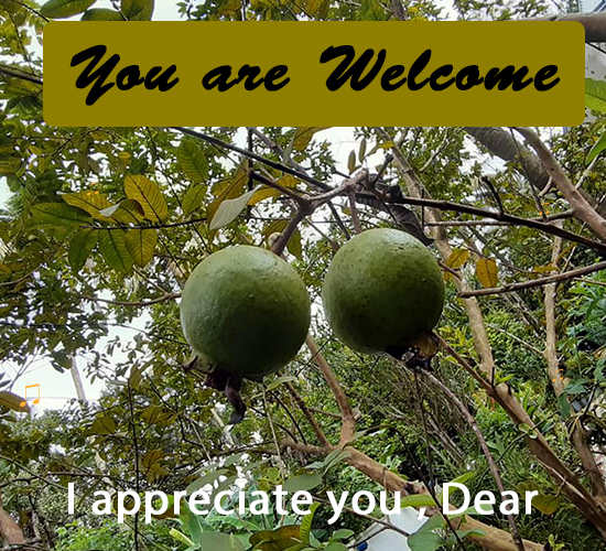 You Are Welcome, Fruits...