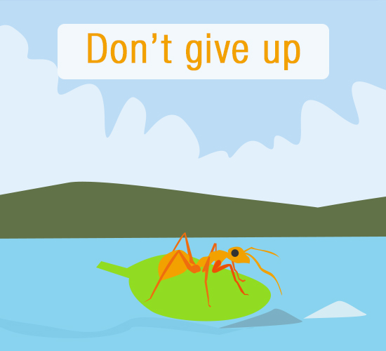 Don't Give Up Ant!