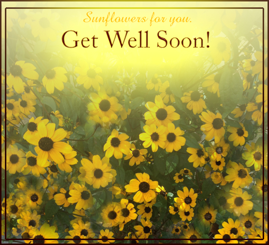 Get Well Sunflowers!