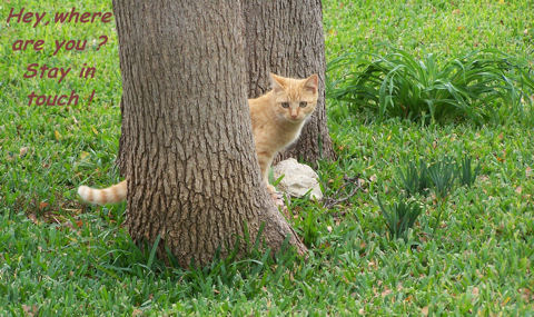 Stay In Touch Tree Kitty.