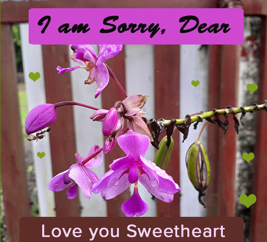 I Am Sorry Dear, Flowers...