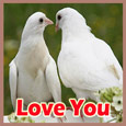 Birds In Love!