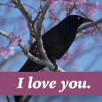 Cute Bird Says I Love You.