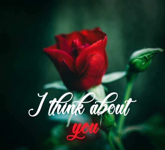 I Think About You - With Red Rose.