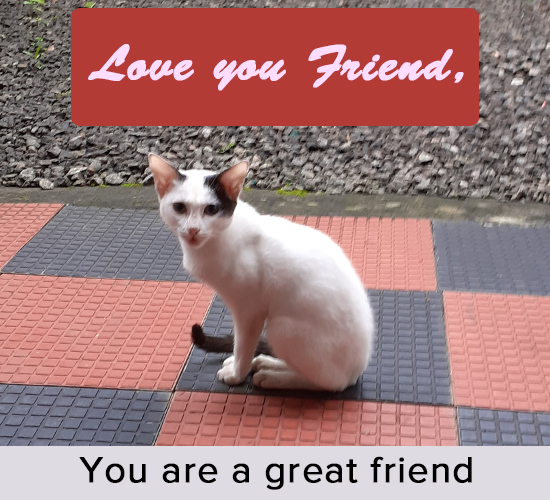 Love You Friend , Cat