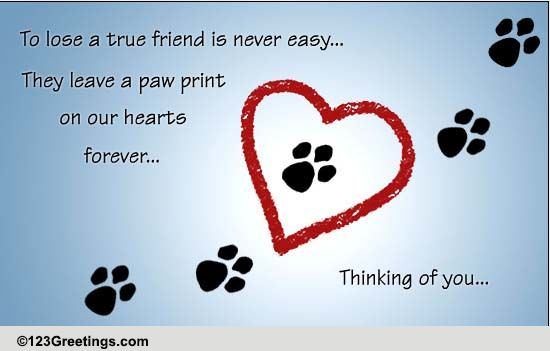 Pets Loss of Pet Cards, Free Pets Loss of Pet Wishes ... | 550 x 351 jpeg 46kB