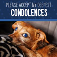 Loss Of Pet Condolences.