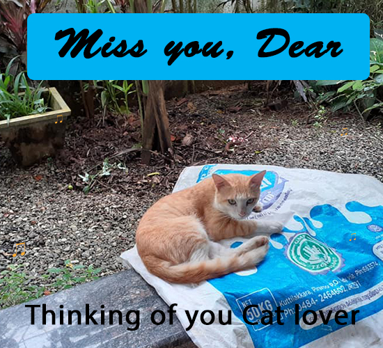 Miss You, Cat Lover...