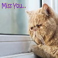 I Really Miss You!